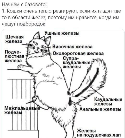 Почему кошка не даёт себя гладить и кусается: что это может быть?