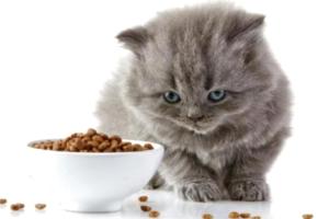 Как происходит кастрация котов