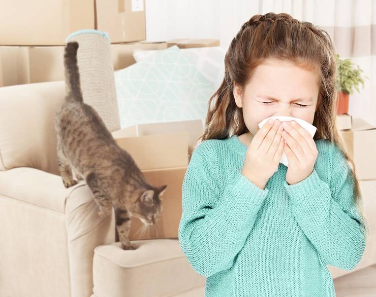 Аллергия у кошек на корм: симптомы и лечение