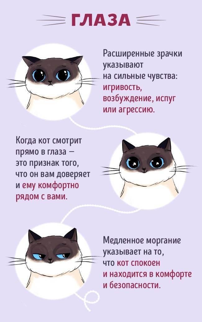 Как общаться со своим котом - wikihow