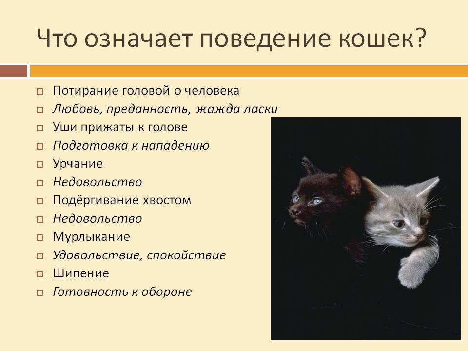 Повадки кошек и особенности поведения в домашних условиях: как понять, что обозначают их привычки?
