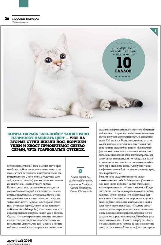 Тайский кот: фото, описание породы, характер, уход и содержание, дрессировка