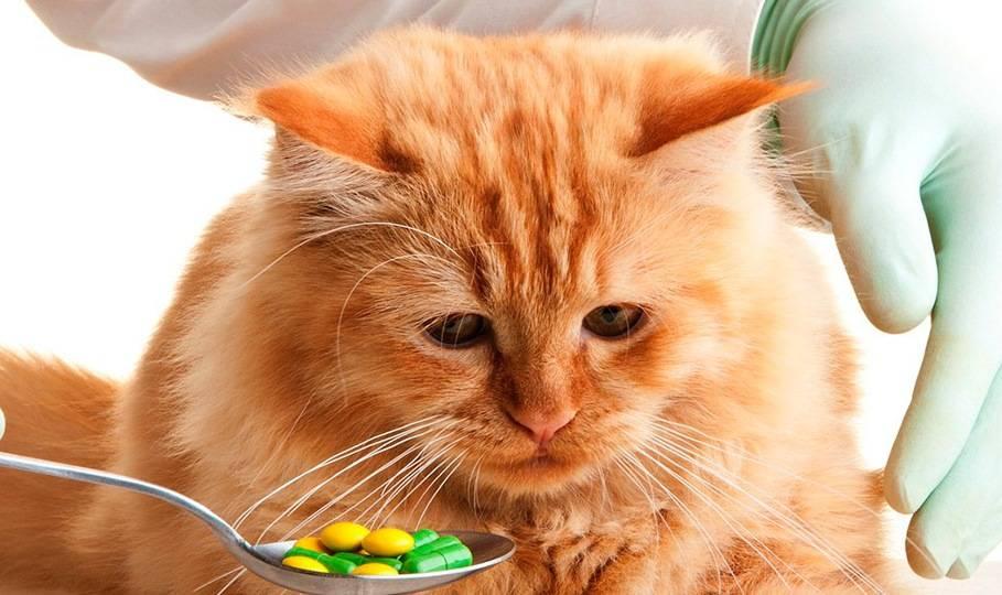 Уремический гастрит у кошек лечение