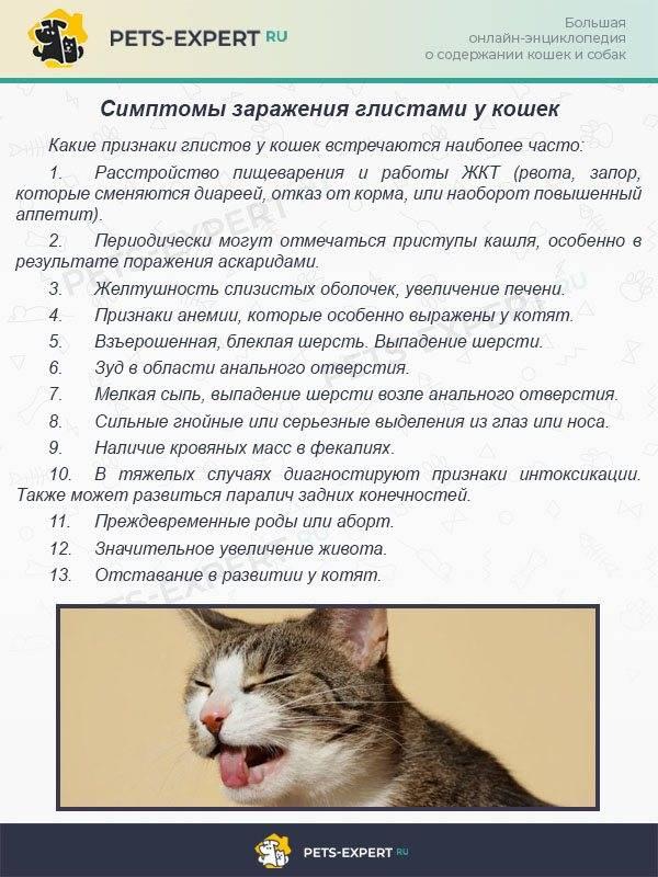 Глисты у кошек симптомы и лечение гельминтов. как дать кошке таблетки от глистов