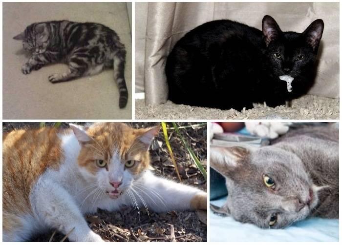 Как проявляется бешенство у кошек | советы от питомца✚