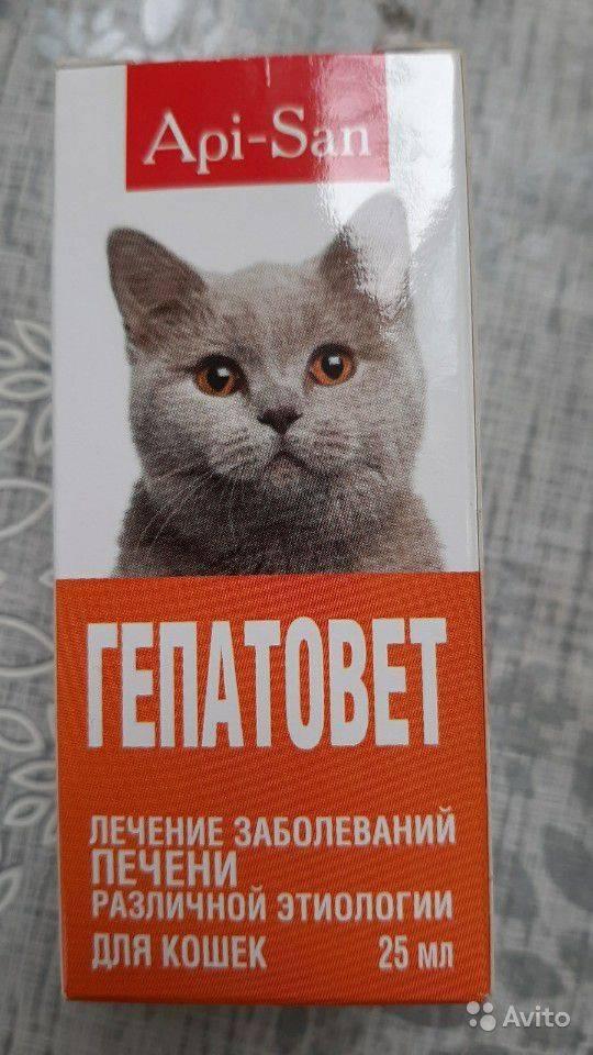 Гепатовет для кошек: инструкция по применению, показания и противопоказания, отзывы ветеринаров
