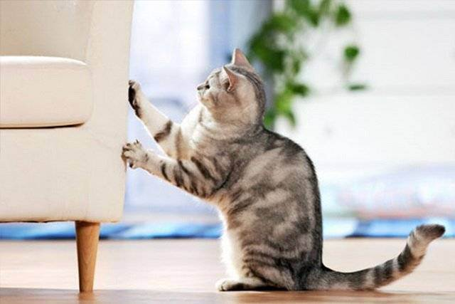 Когтеточка для кошек: виды и как сделать своими руками