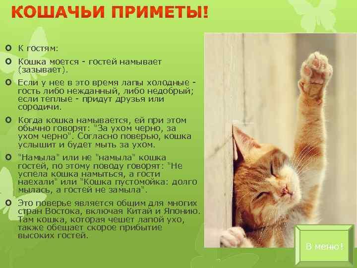 Что несут рыжие коты в дом?