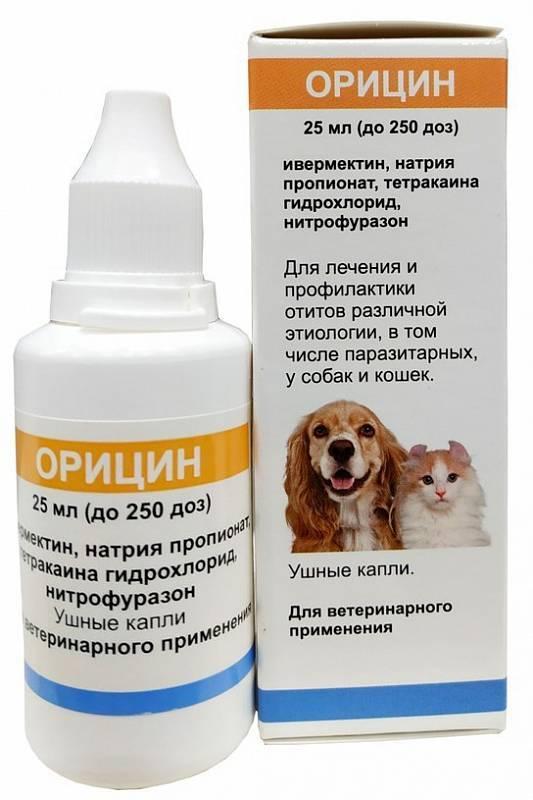 Первая помощь питомцу: ушной клещ у кошек