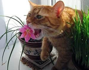 Кошка копает цветы - что делать и как отучить кота от цветов