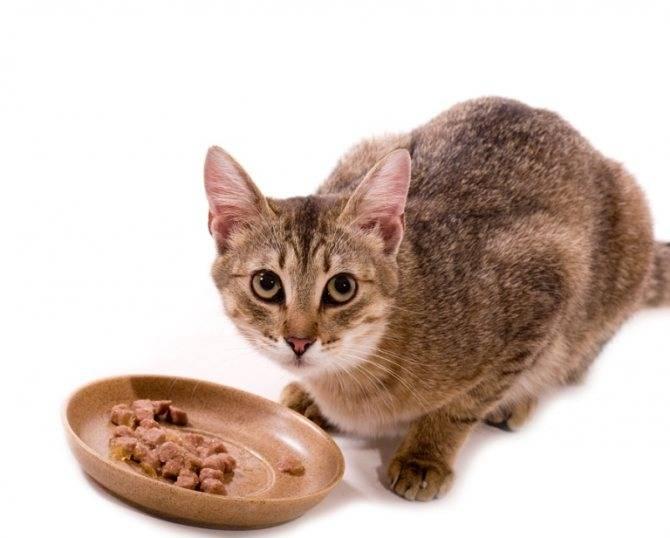 Чем кормить котенка в 2 месяца:  готовый и натуральный корм