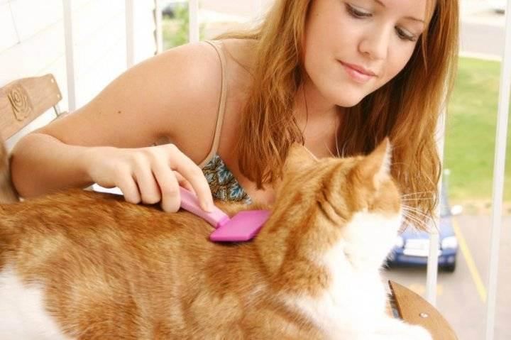 Уход за шерстью кошки — особенности ухода в зависимости от породы