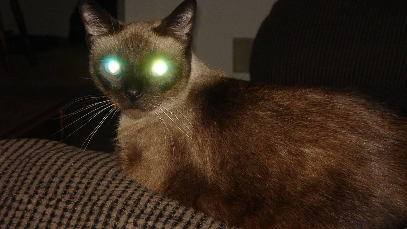 Люминесценция, а также почему у кошек в темноте светятся глаза?