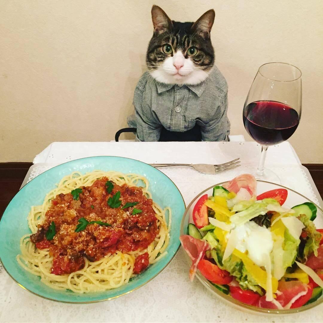 Что делать, если ваша кошка не ест: возможные причины и первичная помощь