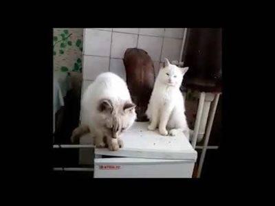 Мороз и кошка