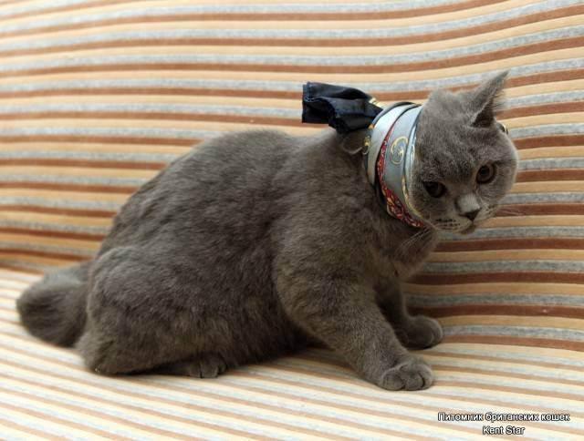 У котенка 4 месяца выпал зуб. смена зубов у котят: симптомы, правильный уход. основные симптомы смены зубов