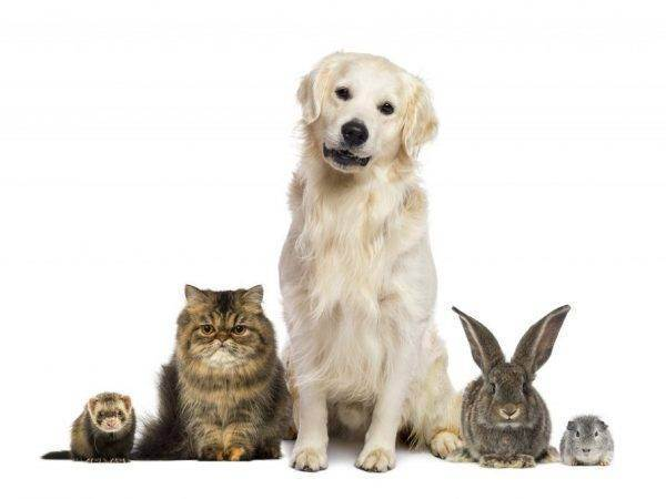 Совместимость животных: какие питомцы хорошо уживаются вместе, а какие – нет