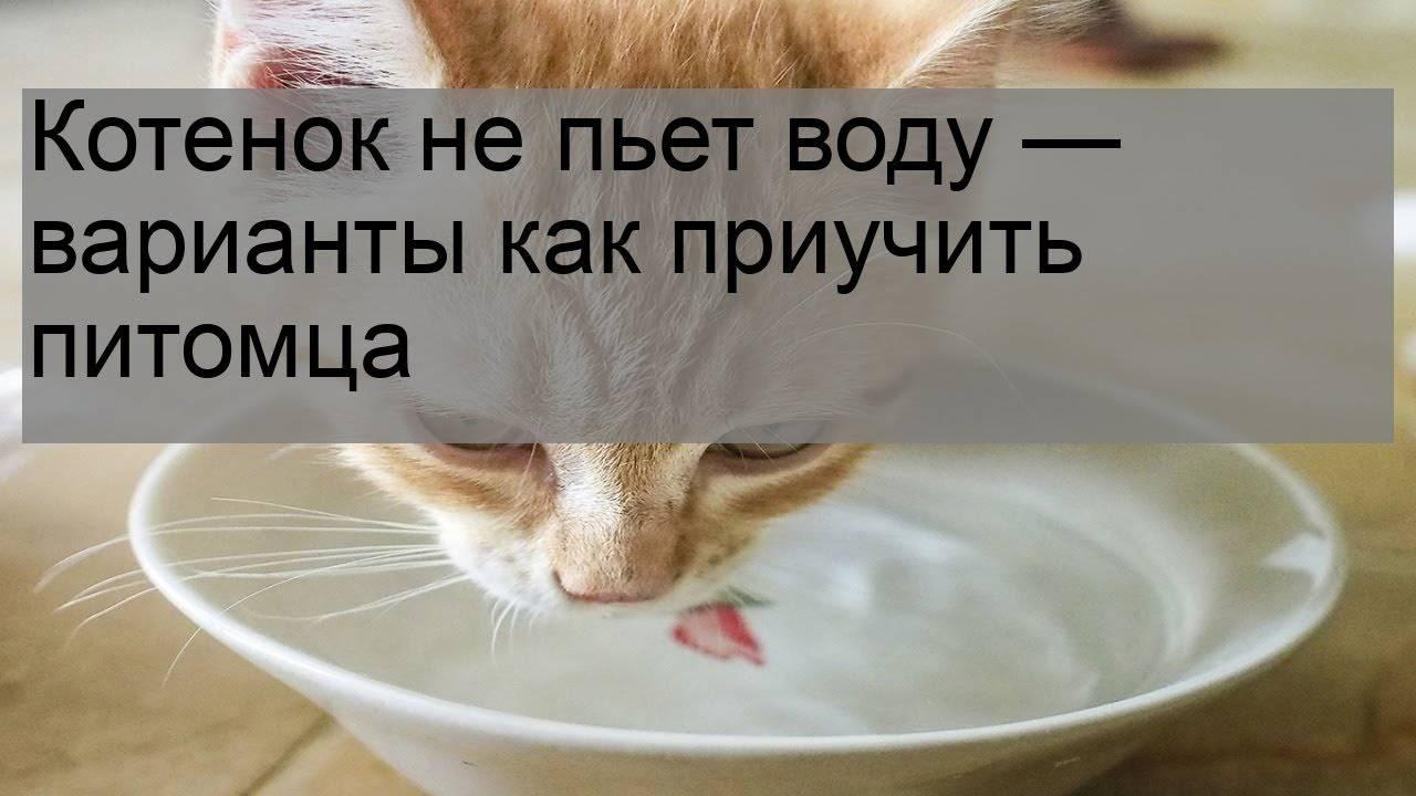 Как приучить котенка есть из миски — правила кормления