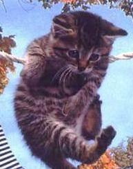 Целебная сила кошки