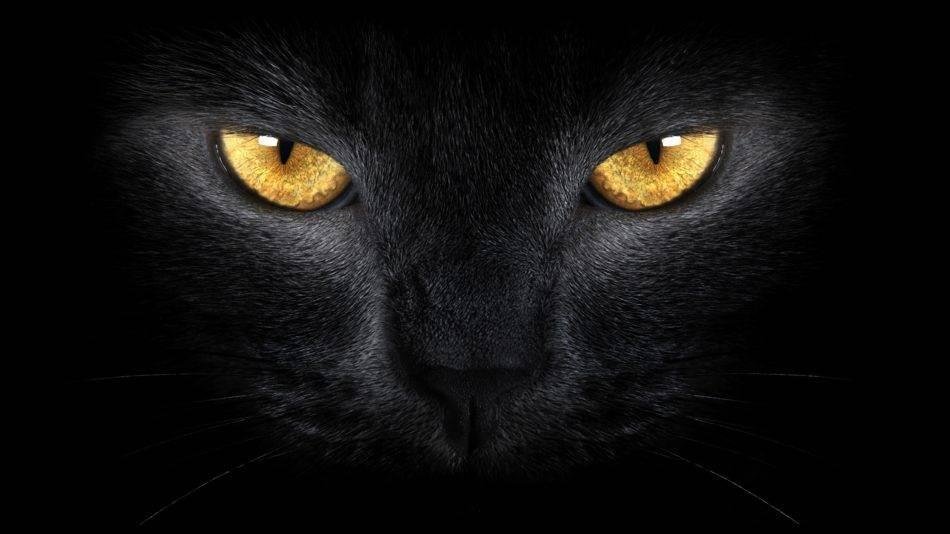 Разные коты