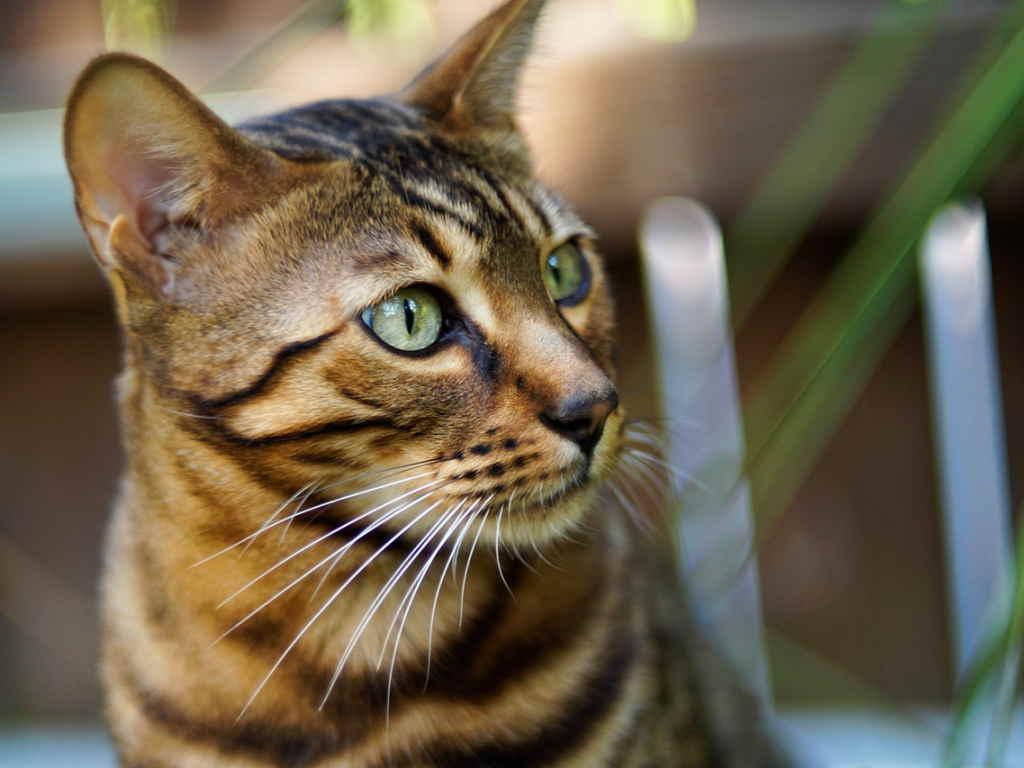 Как и чем лечить насморк у кота в домашних условиях