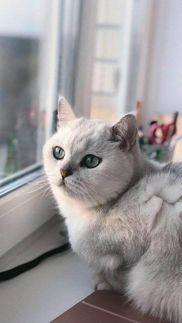 Таблица определения возраста кошки по человеческим меркам