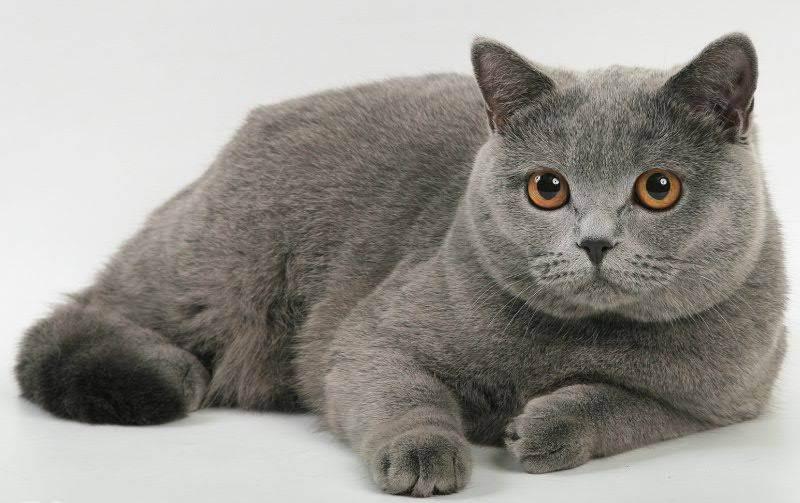 Когда кастрировать кота – возраст, причины, плюсы и минусы