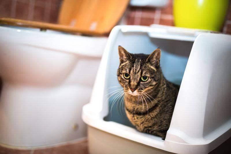 Наполнитель для кошачьего туалета (60 фото): какой наполнитель для кошек, котят и котов лучше выбрать? виды и рейтинг наполнителей 2020, отзывы