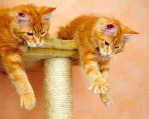 Когтеточка для кошки своими руками: пошаговая инструкция, фото