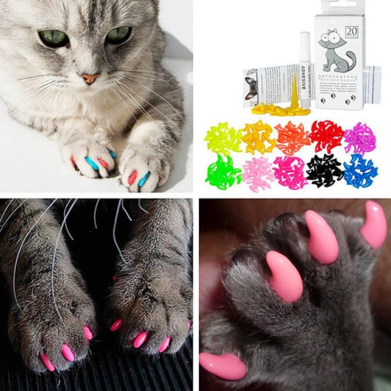 Антицарапки для кошек на когти:как надеть и снять, отзывы