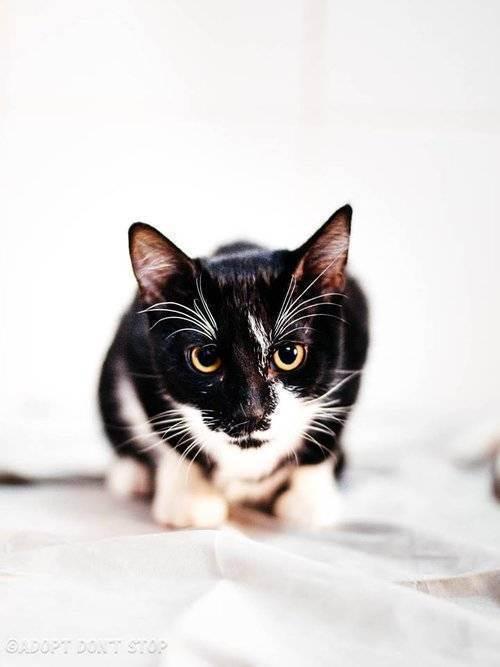 Кошка ссыт везде. ничего не помогает. - запись пользователя рита (id2314451) в сообществе домашние животные в категории помогите советом - babyblog.ru