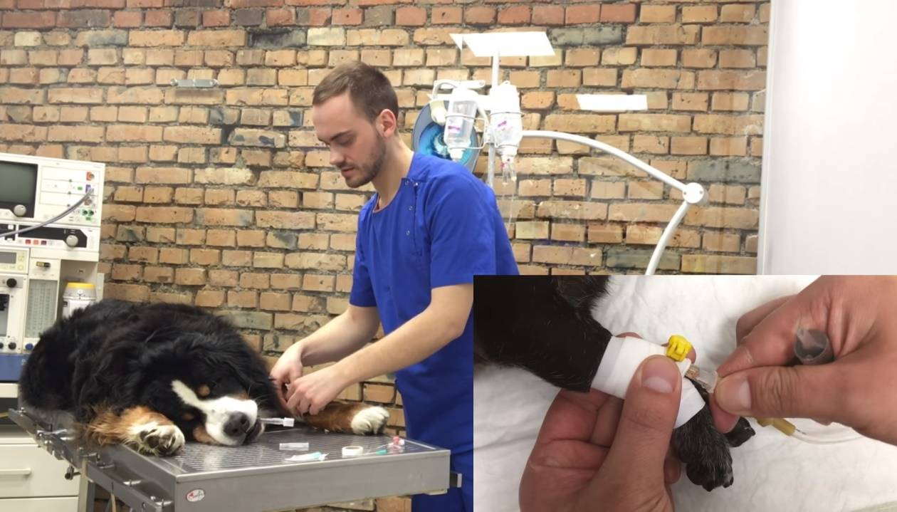 Что такое эклампсия у кошек, симптомы и как ее лечитьветлечебница рос-вет