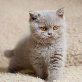 Течет глаз у кошки что делать