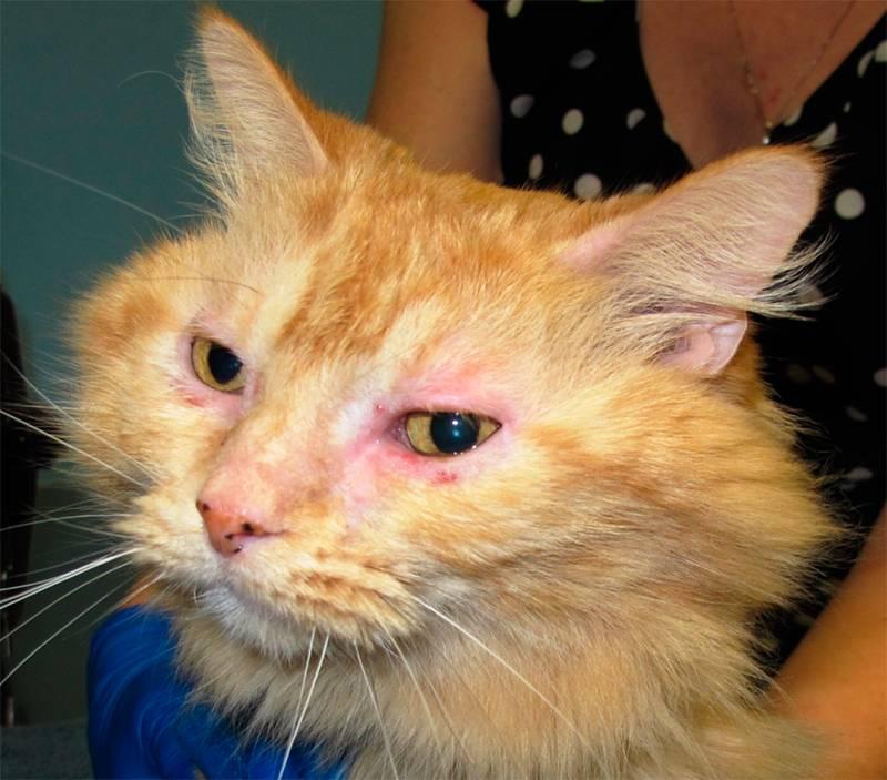 Кошка чихает и слезятся глаза, что делать? какие симптомы должны насторожить