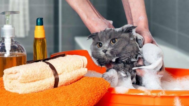 Чем можно помыть кота, если нет специального шампуня?