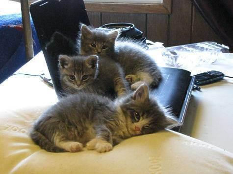 Как подготовится к приезду второго кота? - запись пользователя виктория (vikamsk) в сообществе домашние животные в категории помогите советом - babyblog.ru
