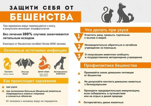 Симптомы, диагностика бешенства у кошек и в чем опасность для человека