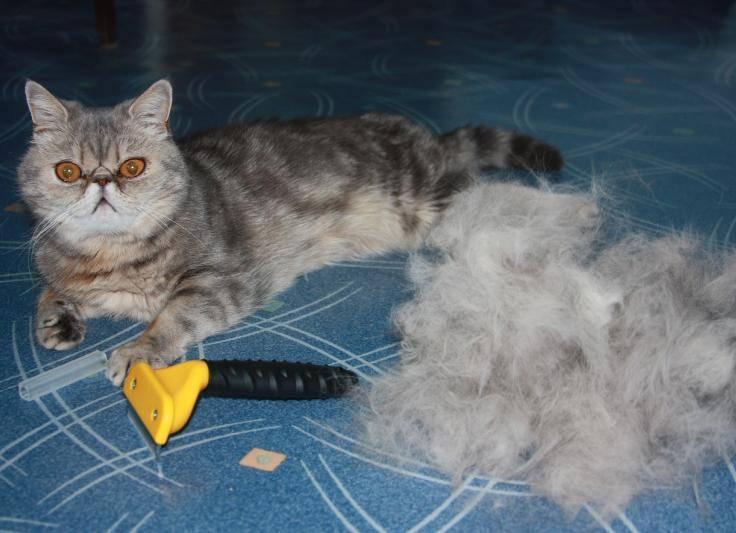 Что делать, если кошка сильно линяет