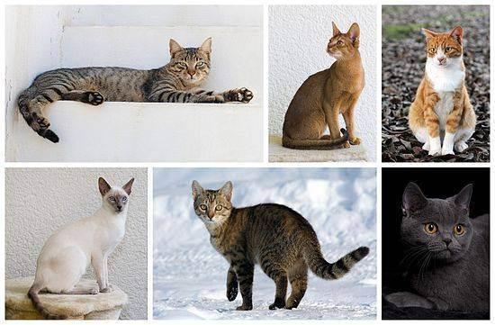 Имена кошек английские