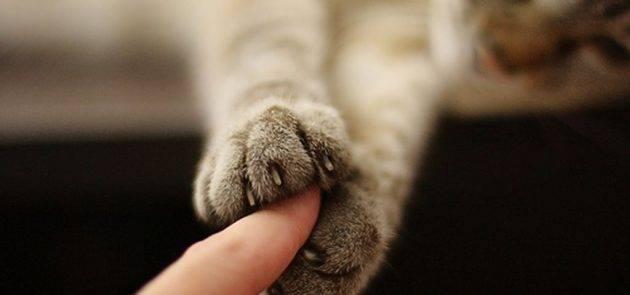 Разведение кошек | мои домашние питомцы