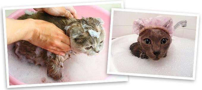 Как купать котенка