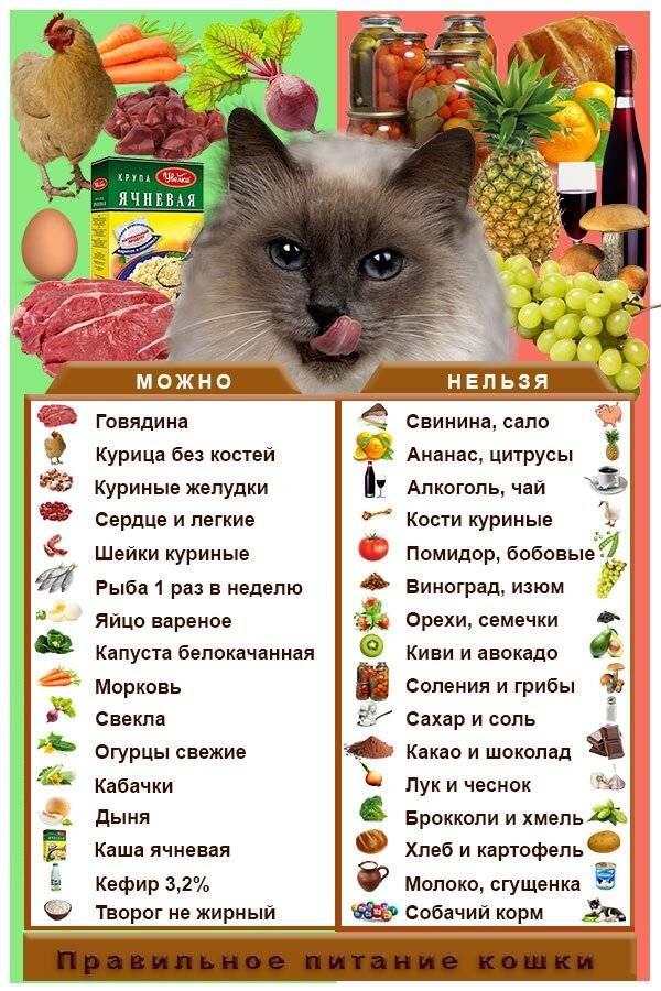 Можно ли кошкам рыбу? все «за» и «против»…