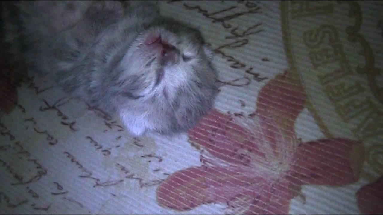 Кошка во сне дергается: причины и что делать