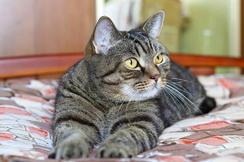 Стоит ли кастрировать кота в 3 летнем возрасте? - коту три года можно ли кастрировать - запись пользователя юля (id1073173) в сообществе домашние животные в категории помогите советом - babyblog.ru