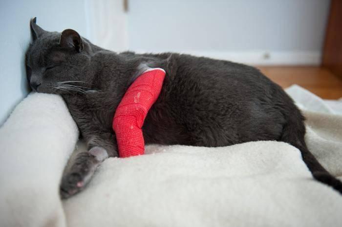 Кошка сломала лапу, что делать?
