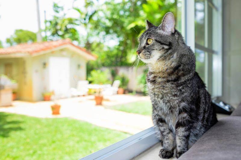Где оставить кошку на время отпуска. советы эксперта