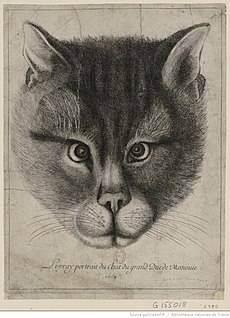 Чем полезны кошки. какую пользу приносят кошки чем полезны кошки для здоровья человека
