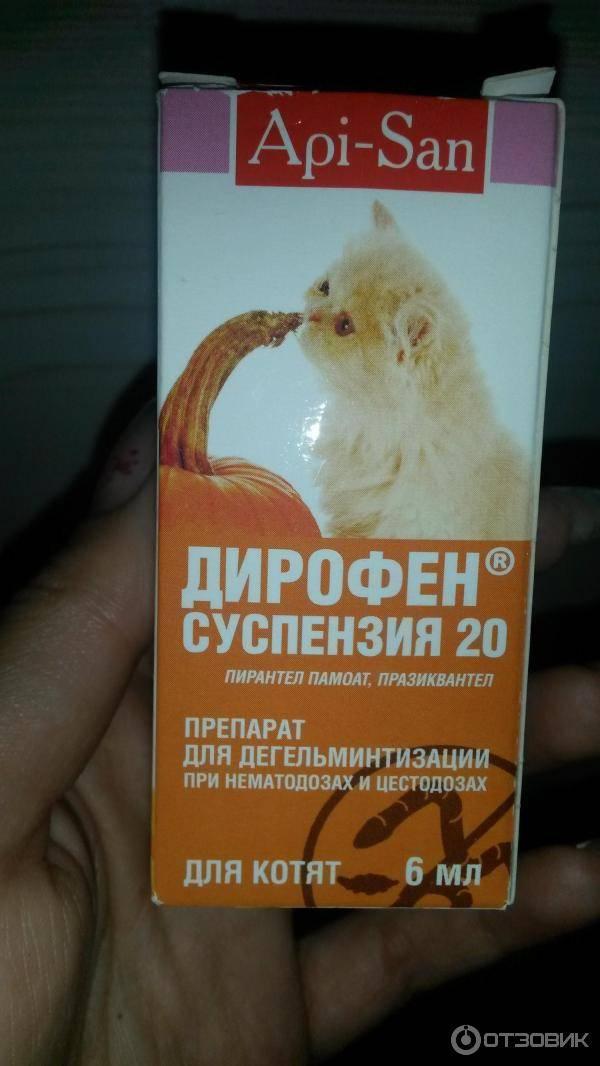 Таблетки от глистов для кошек: когда и как давать, названия, инструкции | zoosecrets