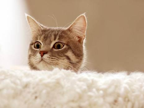 Симптомы болезней у кошек и их лечение