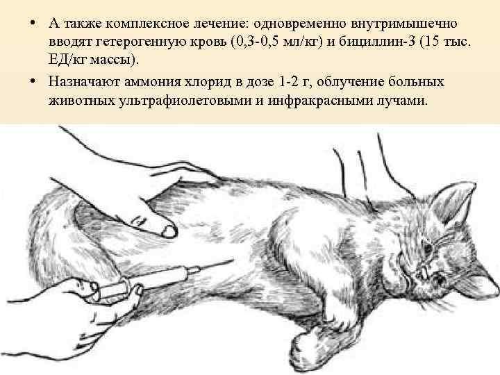 Как выпаивать гамавитом кошку